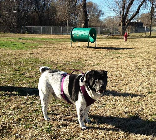 Dempsey Dog Park | Hannibal Parks and Recreation