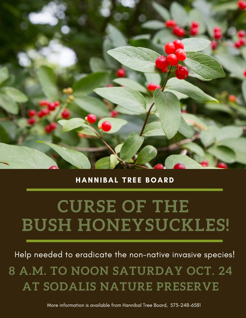 Honeysuckle Removal