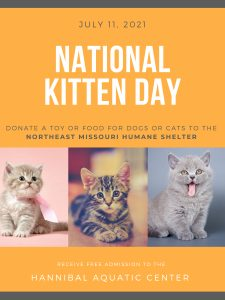Sunday Funday Kittens